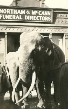Elephants by Funeral Parlor