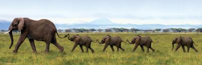 Elephants-Linking Trunks