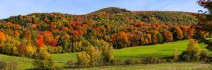 Elevated view of autumn trees on rolling hill, Iron Hill, Quebec, Canada