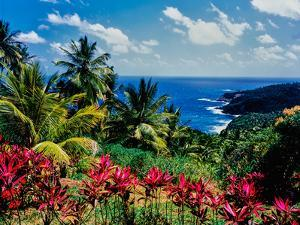 Elevated view of trees and plants on the East Coast, Dominica