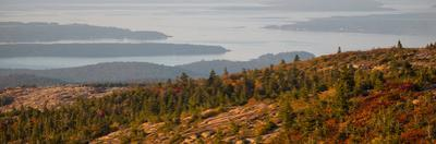 Elevated view of trees, Mount Desert Island, Acadia National Park, Hancock County, Maine, USA