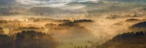 Elevated view of trees on hill in morning, Rudawy Hills, Poland