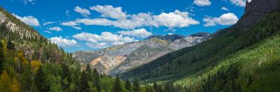 Elevated view of trees on landscape along Country Road 361, Camp Bird Road, San Juan Mountains,...