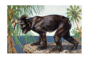 Painting of a Rare Crested Black Macaque, Celebes Black Ape by Elie Cheverlange