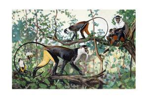 Painting of Diana and Roloway Monkeys in a Treetop Setting by Elie Cheverlange