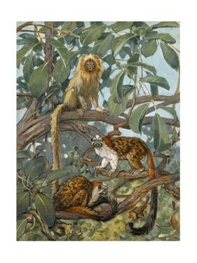 Painting of Marmosets in the Jungle Canopy by Elie Cheverlange