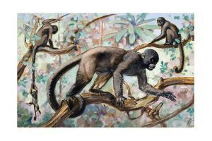 Painting of Wooly Monkeys in a Forest Setting by Elie Cheverlange