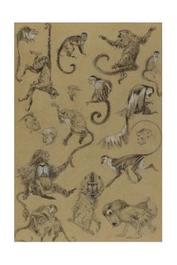 Sketches of Monkeys from the Notebook of Elie Cheverlange by Elie Cheverlange