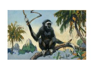 White-Handed Gibbon Travels in Large Bands by Elie Cheverlange