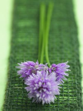 Flowering Chives by Elisabeth Cölfen
