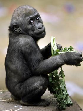 APTOPIX Zoo President Kiki by Elise Amendola