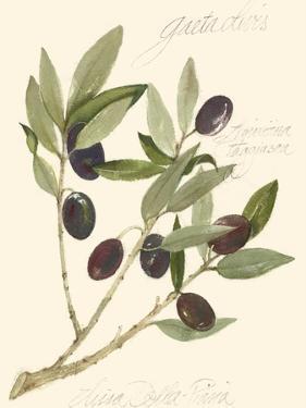 Gaeta Olives by Elissa Della-piana