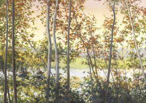 Autumn Shady by Elissa Gore