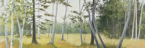 Birch Field by Elissa Gore