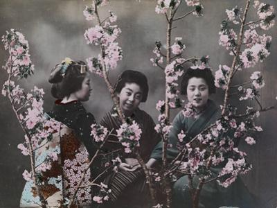 Three girls in kimonos with cherry blossoms. by Eliza R. Scidmore