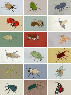 Insects by Eliza Southwood