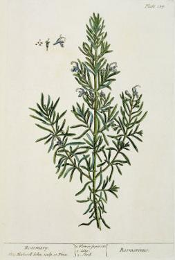 Rosmarinus Officinalis, from 'A Curious Herbal', 1782 by Elizabeth Blackwell