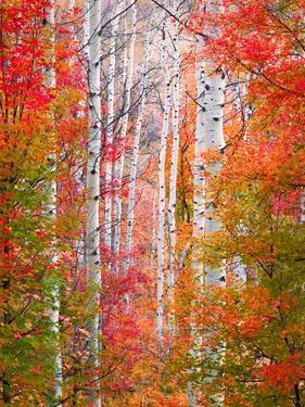 Autumn Passage by Elizabeth Carmel