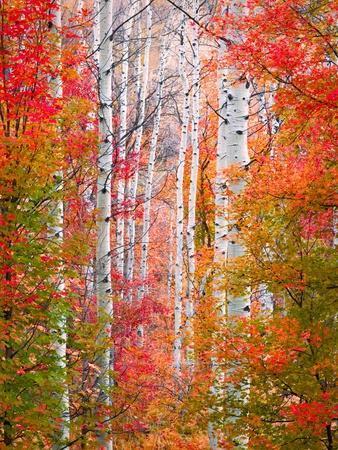 Autumn Passage