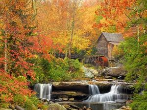 Autumn Splendor by Elizabeth Carmel