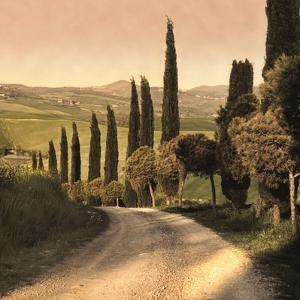 Country Lane, Tuscany by Elizabeth Carmel