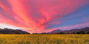 Spring Sunset Napa Valley by Elizabeth Carmel