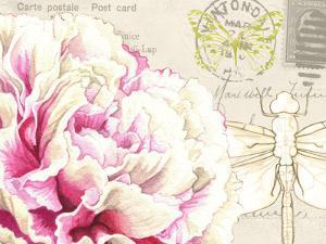 Carnation by Elizabeth Hellman