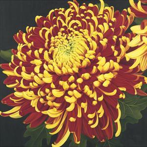 Chrysanthemum 1 by Elizabeth Hellman