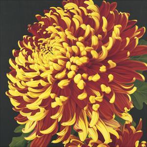 Chrysanthemum 2 by Elizabeth Hellman