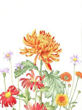 Chrysanthemum Card by Elizabeth Hellman