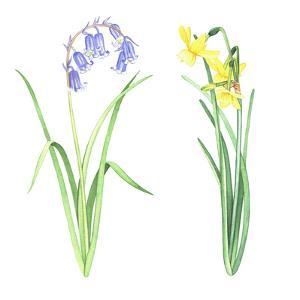 Easter Flowers 3 by Elizabeth Hellman