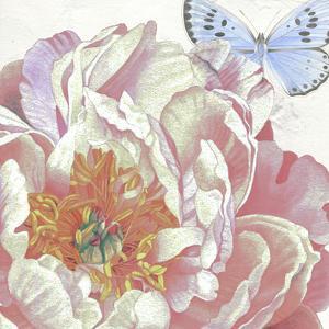 Large Peach Peony Blue Butterfly by Elizabeth Hellman