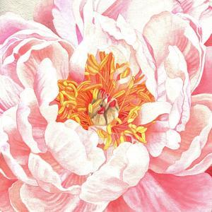 Large Peach Peony by Elizabeth Hellman