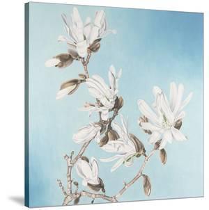 Magnolia by Elizabeth Hellman