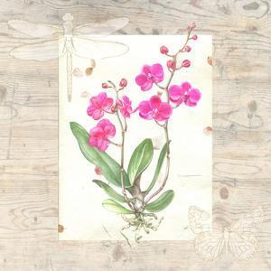 Orchid Wood Grain by Elizabeth Hellman