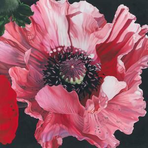 Oriental Poppy by Elizabeth Hellman