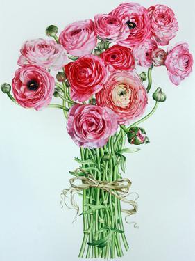Pink Ranunculus by Elizabeth Hellman