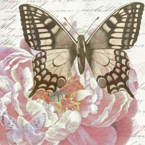 Sepia Swallowtail by Elizabeth Hellman
