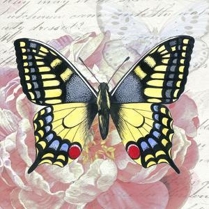 Swallowtail Peach Peony by Elizabeth Hellman