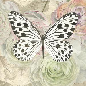 White And Black Butterfly And Ranunculus by Elizabeth Hellman