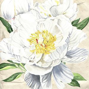 White Peony 2 by Elizabeth Hellman