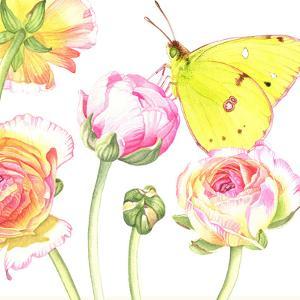 Yellow Butterfly Ranunculus by Elizabeth Hellman