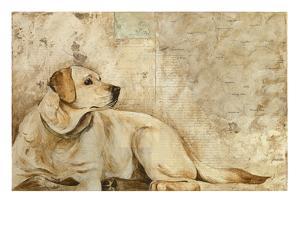 A Dog's Story 3 by Elizabeth Hope