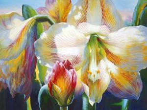 Amarylis by Elizabeth Horning