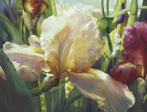 Corrine's Iris by Elizabeth Horning
