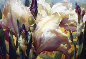 Iris Garden by Elizabeth Horning