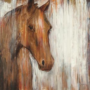 Painted Pony by Elizabeth Jardine