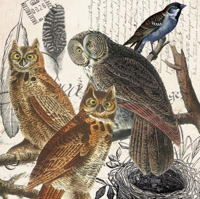 Owl by Elizabeth Jordan