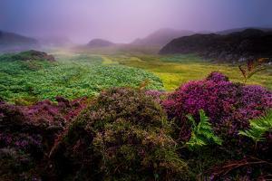 Isle of Mull by Elizabeth May