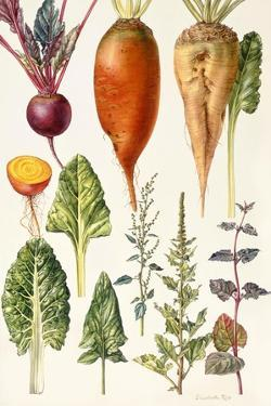 Beetroot and Other Vegetables by Elizabeth Rice